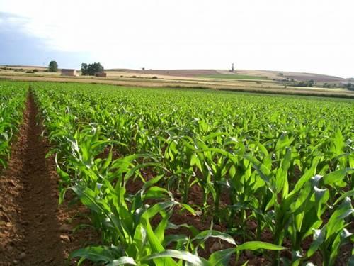 derecho agrario en guadalajara